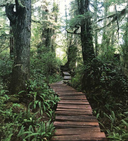 Tofino Tree Boardwalk