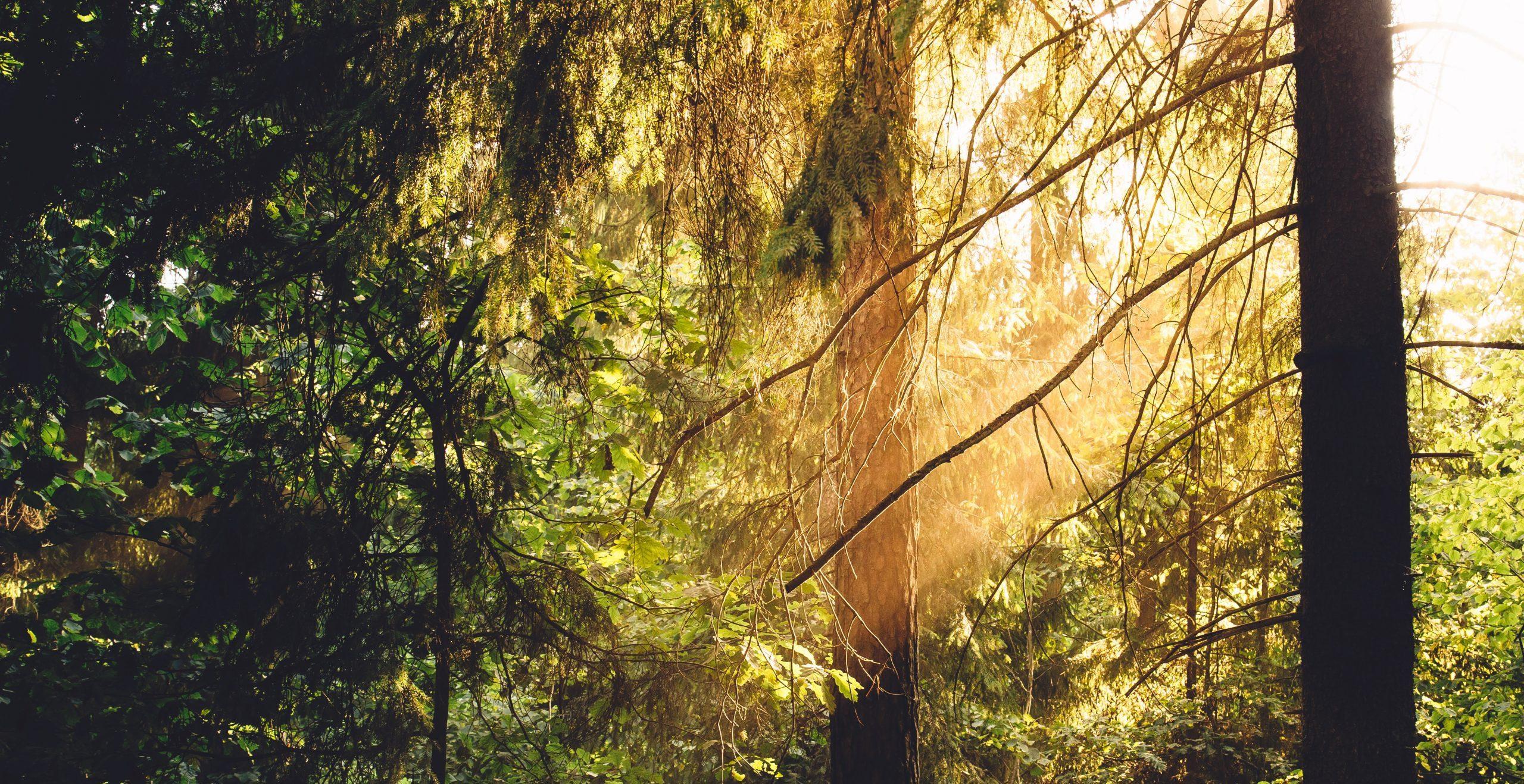 Tofino Forest - Surfgrove Tofino