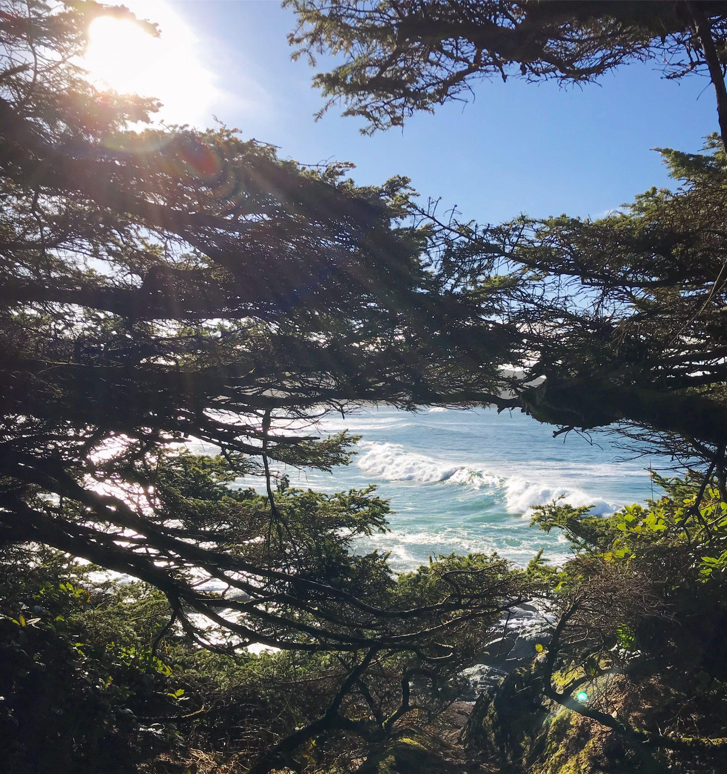 Cox Bay Beach - Surf Grove Tofino